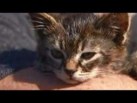 Voorhees - Man Saves Kitten Glued to Road