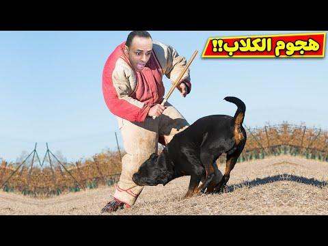 هجوم الكلاب الشرسة | mad dogs !! 😱🐕