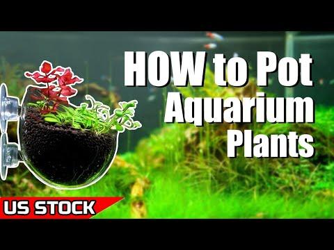 How to pot aquarium plants- Senzeal