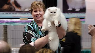 CFA International Cat Show 2019  Best of the Best