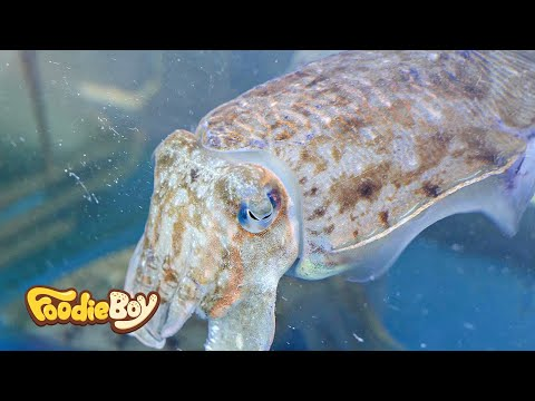 Sliced Cuttlefish / Dokdo Kkotsaeu, Busan Korea / Korean Street Food / 갑오징어 / 부산 부평동 독도꽃새우 길거리 음식