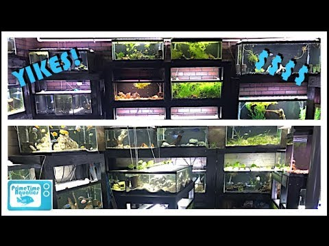How Much Does it Cost To Build A Fish Room??