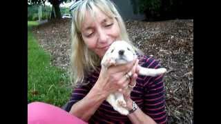 Georgia: Cocker Spaniel Puppy With Lynn Fortheanimals Rescue Squad
