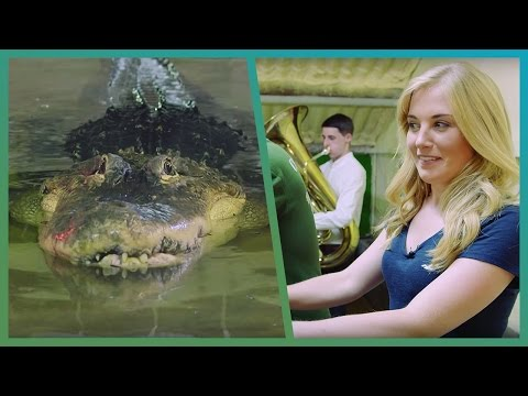 Maddie Flirts With A Huge Alligator! - BBC Earth Unplugged