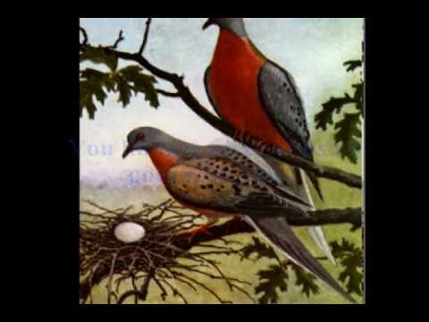 Ode to Martha, the last passenger pigeon