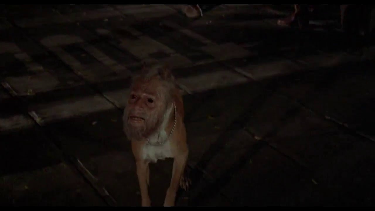 Invasion of the Body Snatchers (1978) - Man Dog - YouTube