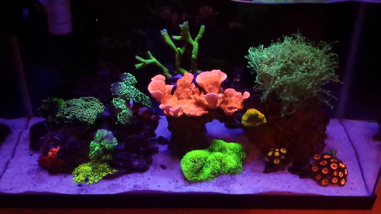 DIY LED Light Diffuser u0026 DIY Nano Protein Skimmer - 10 Gallon Reef Tank Update - YouTube & DIY LED Light Diffuser u0026 DIY Nano Protein Skimmer - 10 Gallon Reef ... azcodes.com