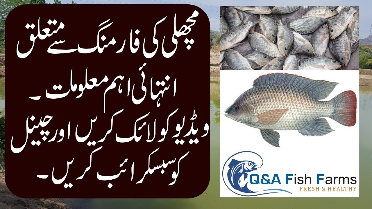 Introduction to Fish Farming. How to make Fish Farm Hindi ...