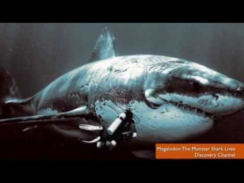 MEGALODON SHARK EXISTS! Recent sightings & sharks pictures prove it. - YouTube