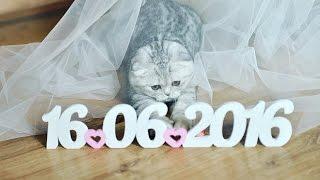 Сказочный свадебный клип от Максима и Елены. Видеограф Максим Кривошеев г. Полтава