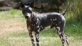 Самые редкие собаки в мире