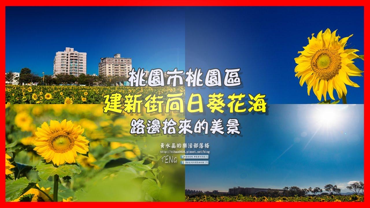 桃園建新街向日葵花海 黃水晶的樂活TV - YouTube