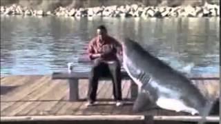 Attaque de requin sur la terre ferme!! Grand BLANC