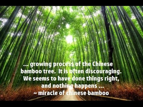 The Miracle Of Chinese Bamboo Inspiration Youtube