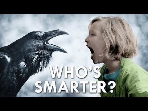Is a Crow Smarter Than a Fifth Grader?