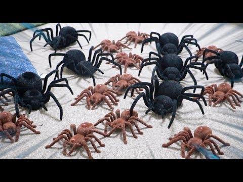 【閲覧注意】でけぇクモが大量に部屋にいるドッキリ