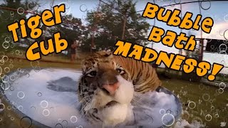 Tiger Cub Bubble Bath MADNESS!!!