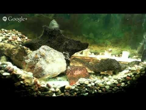 Bettendorf Middle School - Cichlid Tank with Eggs