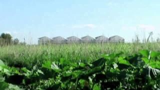 MUM Organic Farms -- Maharishi University