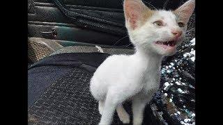 Жидкий корм для больных собак  Котёнок выбежал на дорогу под колёса машины