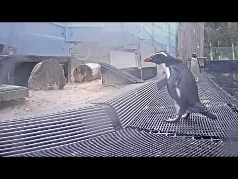Animal House: Live Stream Melbourne Zoo