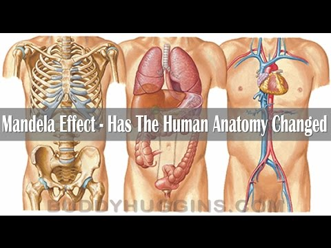 Mandela Effect - Has the human anatomy changed