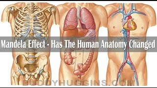 Mandela Effect - Has the human anatomy changed