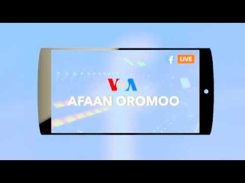 Voa Afaan Oromoo oduu news guyyaa harraa  tuday 2018