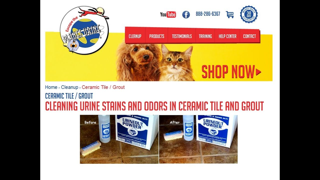 Dog And Cat Urine From Tile Grout