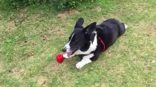 説明ボール遊びにつかれた蒼ちゃんが 近所の田んぼに来たキジの声に耳が...