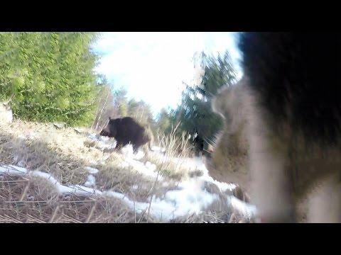 Охота #87 кабан напал на собаку