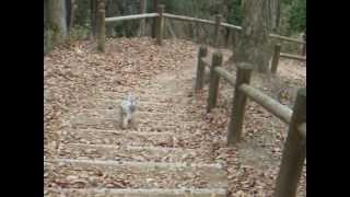 ヨーキー レオンの山歩き 阿武山(2011年2月)