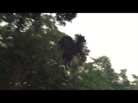 New Jersey Devil Sightings! Monsters and Cryptids