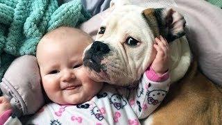 tiernas mascotas sorpresa Niños compilación! - Bebés y mascotas divertidos