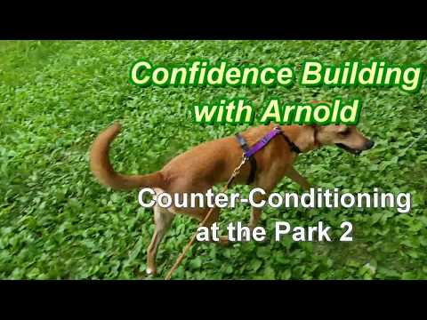 Confidence Building w Arnold - Counter-Conditioning in the Park 2
