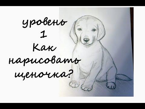 Вопрос: Как нарисовать щенка?