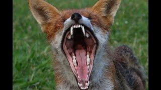 Животные актеры! Почему съемки с пушистыми  и пернатыми самые сложные     Эфир от 6.10.2016