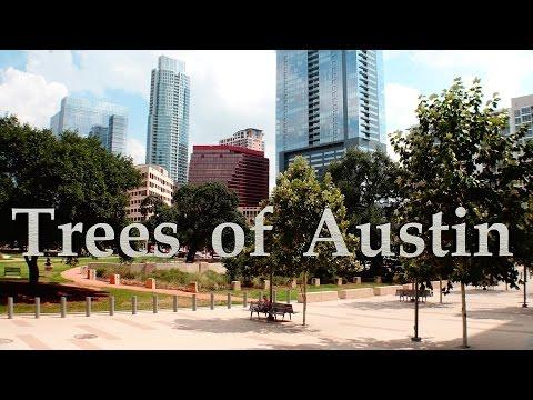 Trees of Austin