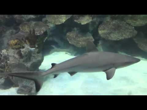 Istanbul forum sealife aquarium