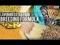 Komposisi Pakan Dan Vitamin Serta Egg Food Untuk Ternak Lovebird Efek Nganggur  Mp3 - Mp4 Download