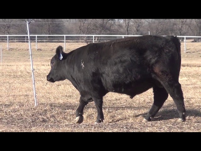 Express Ranches Lot 54
