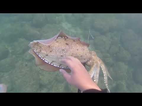 الغوص الحر في عمان - free dive in Oman