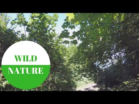 WILD NATURE: Am Burghof am Bodensee in GERMANY