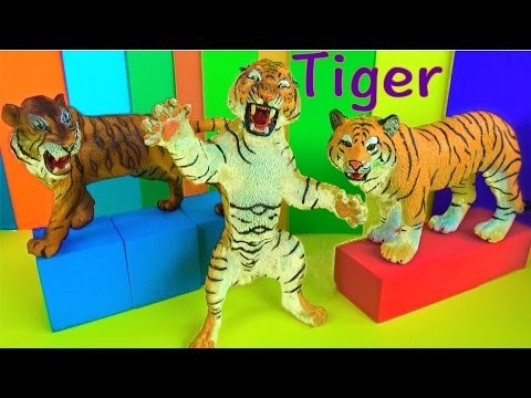 Big Cat Week 2017 - Wild Animals - Learn about Tigers - Zoo Animals - Kids Toys - Educational