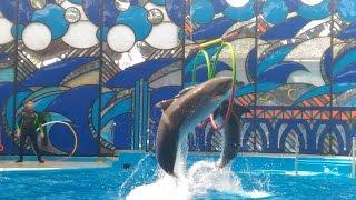 Шоу Дельфинов в парке Ривьера Дельфинарий Сочи