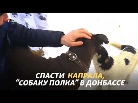 Видео: Спасти Капрала, ветерана Донбасса