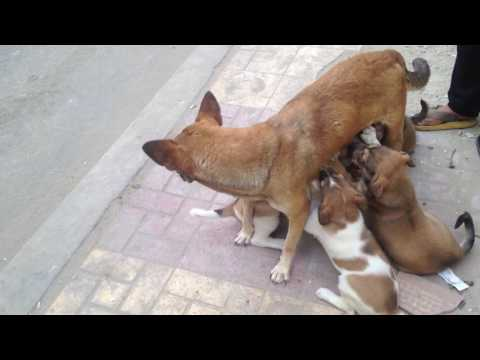 Mother Dog Feeding its puppies :)