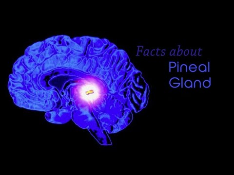 Facts about Pineal Gland