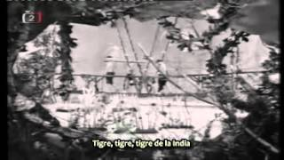 Viktor Sodoma - Tygr z Indie (Tigre de la India) [subs español]