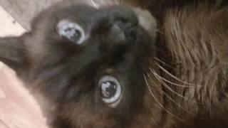 Обзор кошки маркизы часть 1